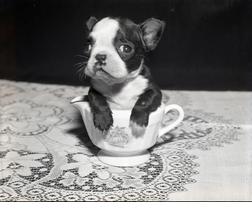 Hayes Dog in Cup